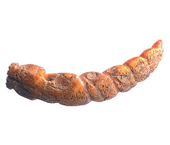 Colima Shell Ornament in the Form of a Snake